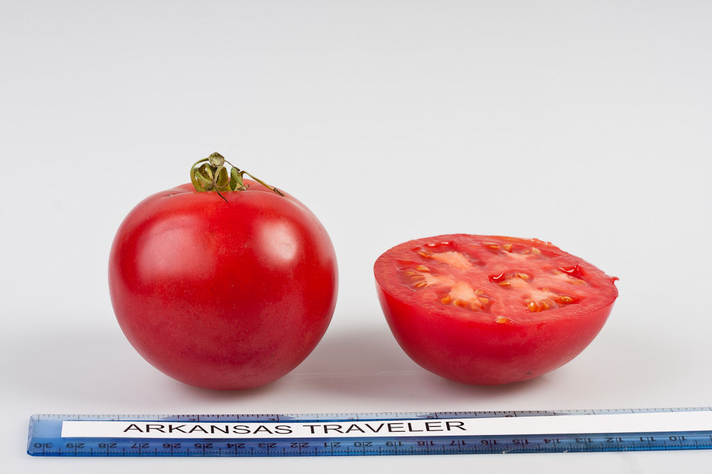 Tomato_09_Arkansas_Traveler
